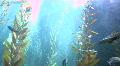 Giant Fishtank Footage