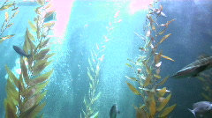 Giant Fishtank Stock Footage