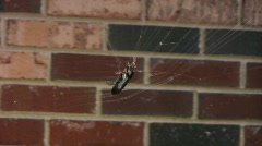 SPIDER ugh here it comes! Stock Footage