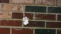 Slowmo of spider and prey02 Stock Footage
