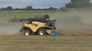 Stock Video Footage of New Holland combine harvester gathers previously cut Rape Seed