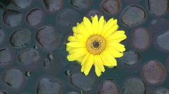 Flower Drifter Stock Footage
