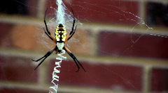 Spider eww01 Stock Footage