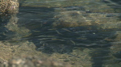 Fish lings Stock Footage