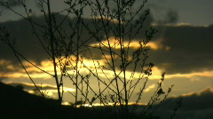 Silhouette of swaying branches on sunset Stock Footage