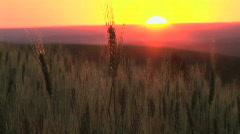 Setting Sun Sunset behind a wheat field in Palouse, Washington - stock footage