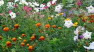 Flowers of garden Stock Footage