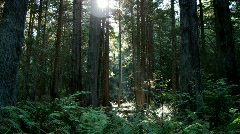 Forest sunlight shadow Stock Footage