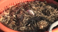 Stock Video Footage of north sea shrimp fishing