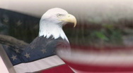 Stock Video Footage of Bald Eagle and American Flag