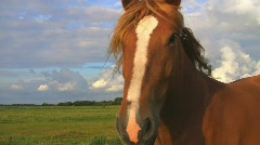 Two horses on summer pasture Stock Footage
