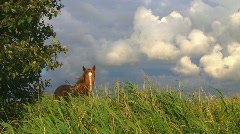Horse on summer pasture Stock Footage