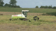 Stock Video Footage of Rape seed being cut 2
