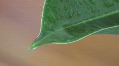 Green leaf - Rain drops Stock Footage