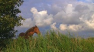 Stock Video Footage of Horse on pasture