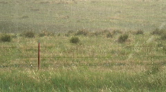 Golf ball size hail falling in grass Stock Footage