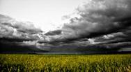 Stock Video Footage of storm rolls over grain field