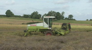 Stock Video Footage of Rape seed being cut