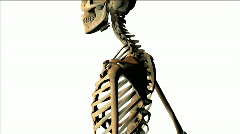 Human skeleton Stock Footage