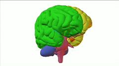 Brain white Stock Footage