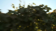 Grapevine tracking Stock Footage