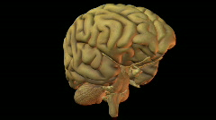 Seamless loop of a human brain Stock Footage