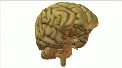 Brain2w Stock Footage