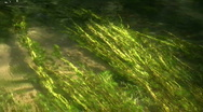 River algae Stock Footage