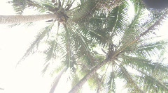 Palms Overexposed Vertical Stock Footage
