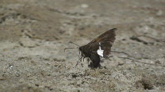P00435 Skipper on Sand Stock Footage