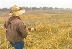 Pheasant Hunting 05 Stock Footage