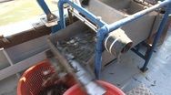Filling the shrimp sieving machine Stock Footage