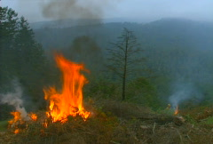 Mt. Tam Control Burn 11 Stock Footage