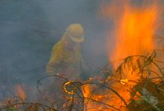 Mt. Tam Control Burn 12 Stock Footage