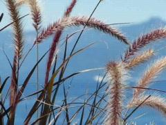 Florals Sway in Lake Tahoe Breeze Stock Footage