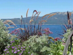 Florals at Lake Tahoe Shoreline Stock Footage
