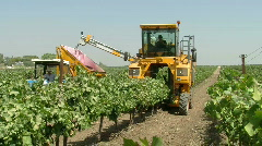 Vineyard mechanical picking 4 Stock Footage