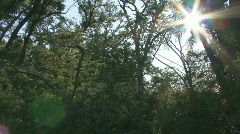 P00459 Midwest Deciduous Forest and Sun Flare Stock Footage