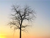 Lone Tree Standing In The Sunset Stock Footage