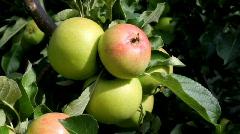 apple - stock footage