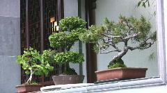 Bonsai Trees Stock Footage