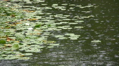 Rain Falling Into Large Decorative Lily Pond In A Garden Stock Footage