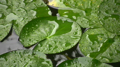 Rain On A Lily Pond Stock Footage