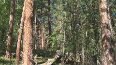 P00523 Old Growth Forest at Mount Rushmore Stock Footage