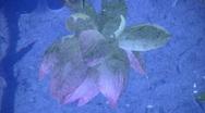 Lotus Reflections 1 Loop Stock Footage