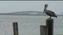 South Padre pelican bridge background Stock Footage