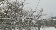 Stock Video Footage of Snow covered branches of small tree