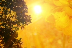sunny forest - stock footage