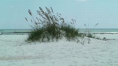 Anastasia Beach & Sea Oats Medium Shot - stock footage