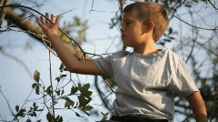 Boy sitting in a tree Stock Footage